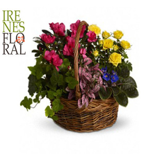 Blooming Garden Basket   T213-3A
